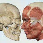 Mund-, Gesichts- und Kieferchirurgie, ZahnZentrum Friedrichshain
